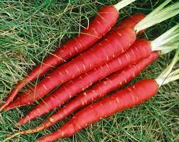 गाजर खाने के फायदे, ऐसे करें सेवन